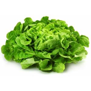 Salade feuille de chêne (la pièce)