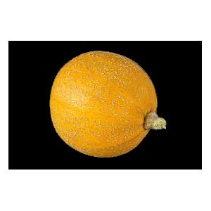 Courge melonnette jaspée de Vendée (la pièce - 1.3 kg min)