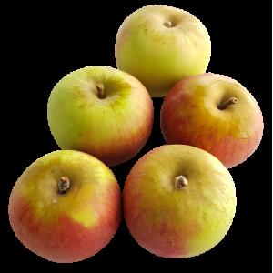 Pomme reine des reinettes (1 kg)